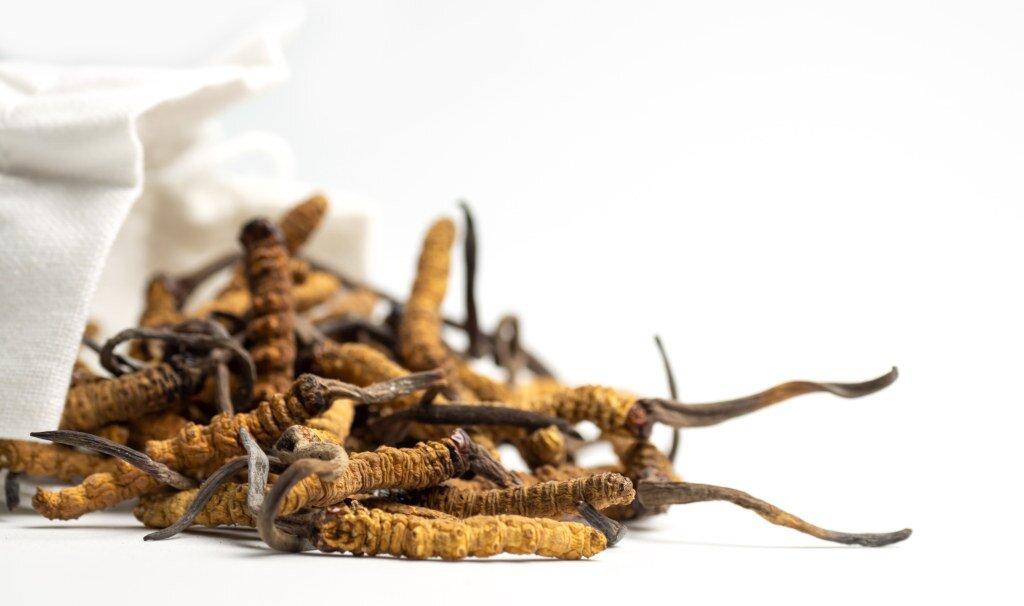 Wygląd i ogólna budowa grzyba Cordyceps
